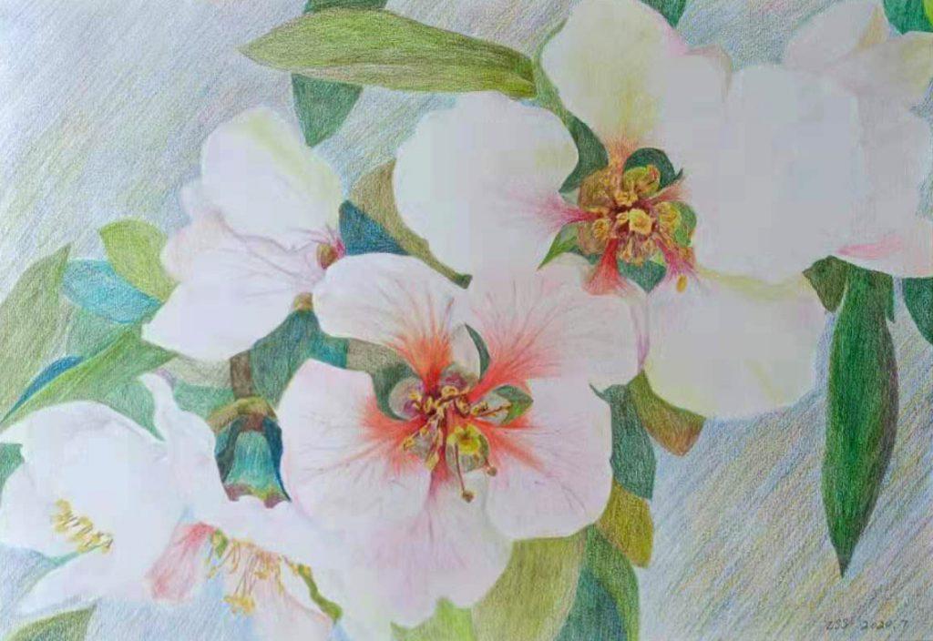 花信之海棠花 Information about flowers